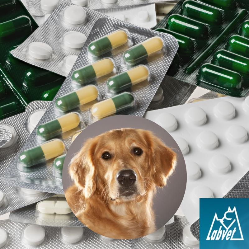 alergie u psa