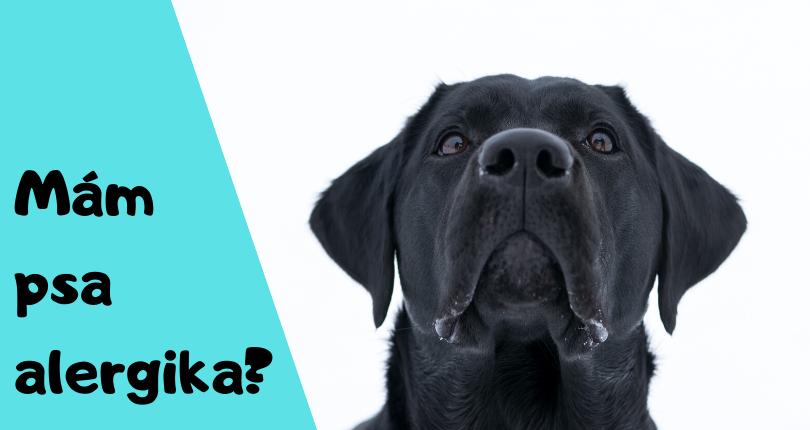 Testy na alergie u psa