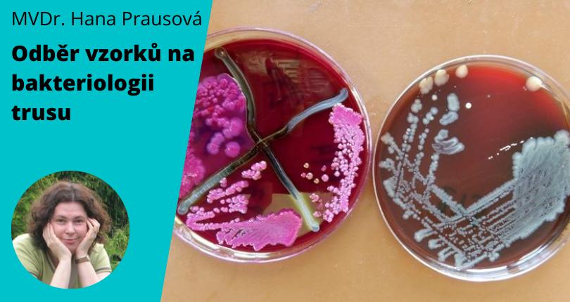 Veterinární laboratoř Labvet provádí bakteriologická vyšetření.