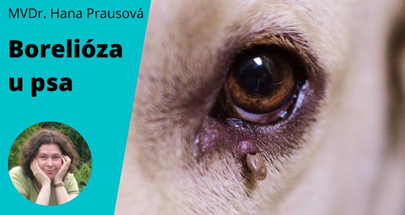borelióza u psa příznaky