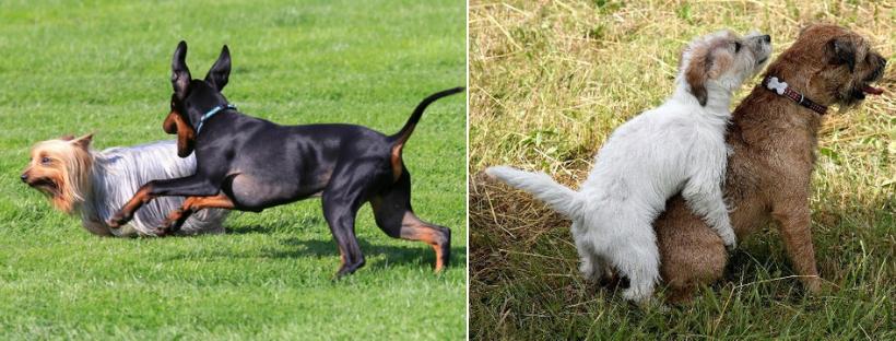 socializace psů